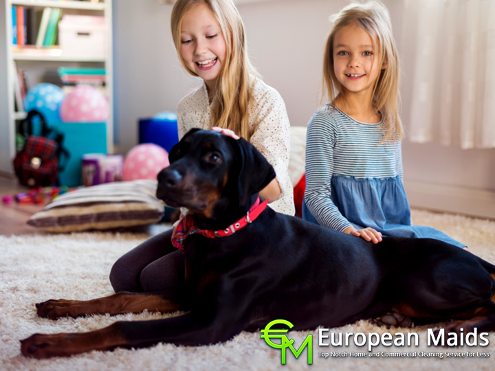 Importance Of Carpet Cleaning If You Have Pets
